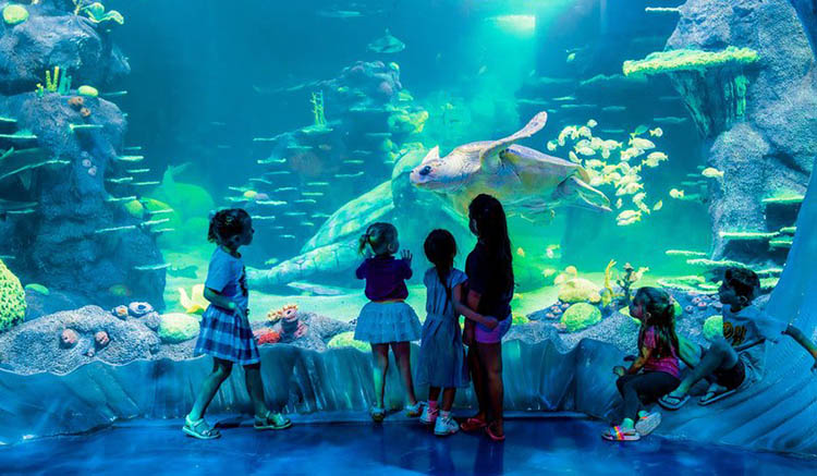 sea life aquarium australia